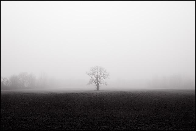 lima-tree.jpg